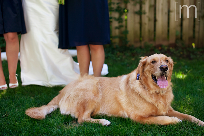 a photo of the bride's dog at the oakville club