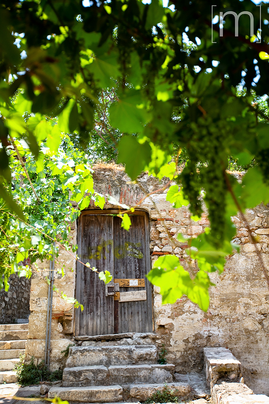 a travel photo of a doorway with vines in athens greece