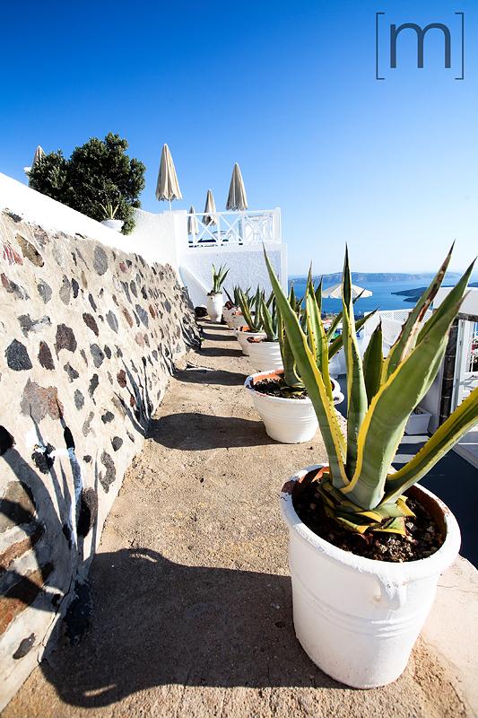 a travel photo of aloe plants in santorini greece