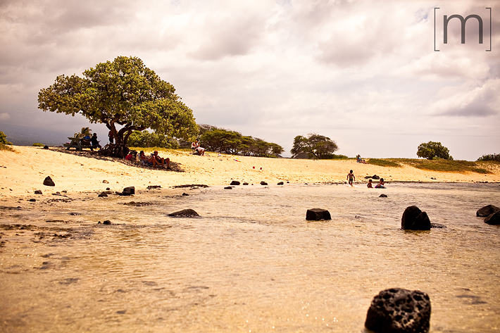 a travel photo of a a beautiful beach with a big tree in hawaii