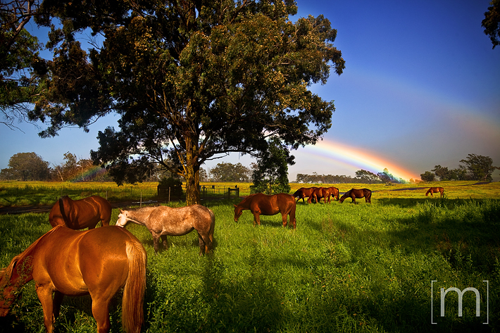 a travel photo of the big island double rainbow in green horse field in hawaii