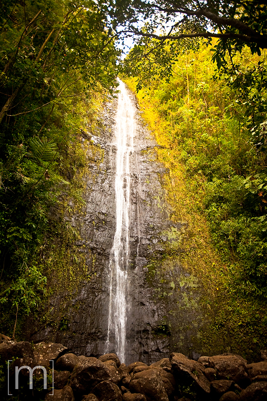 a travel photo of manoa falls in oahu hawaii