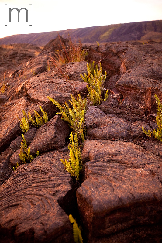 a travel photo of grass coming through the hard lava at volcano national park hawaii