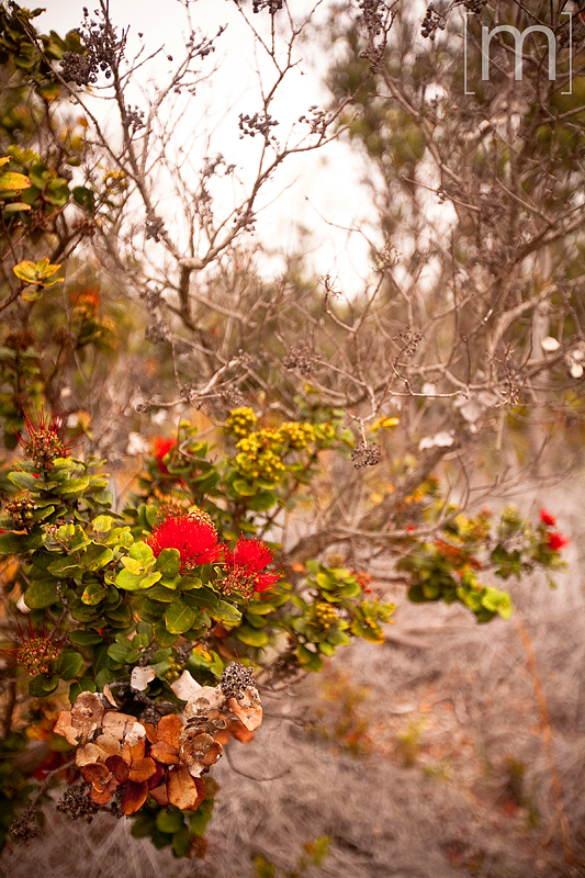 a travel photo of red flowers at volcano national park hawaii