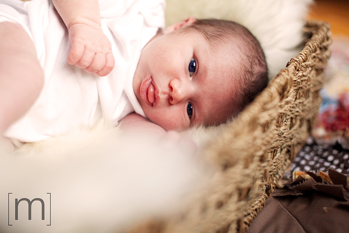 a photo of a baby laying in wicker basket at new born photoshoot in hamilton