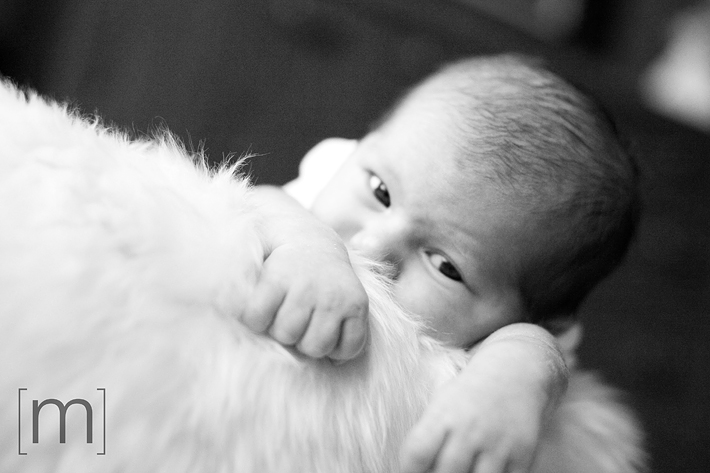a photo of a baby laying in fur basket at new born photoshoot in hamilton