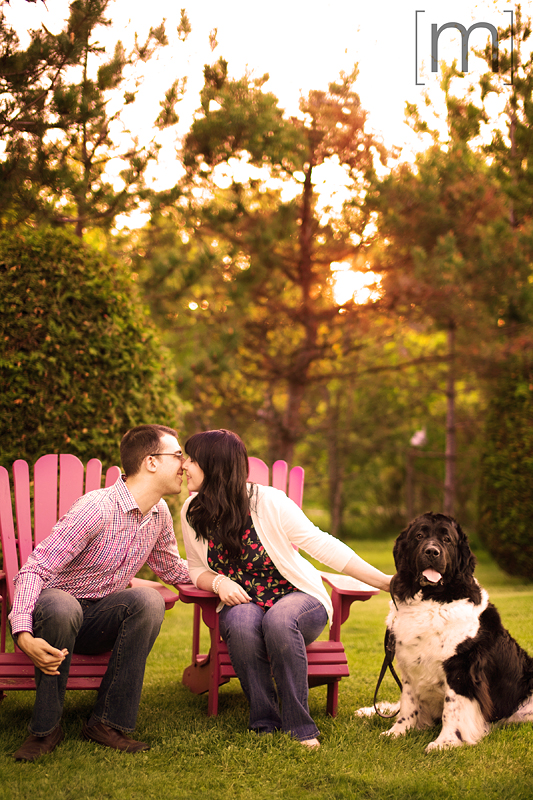 a photo of a couple sitting with their cute dog at an engagement shoot in brighton ontari