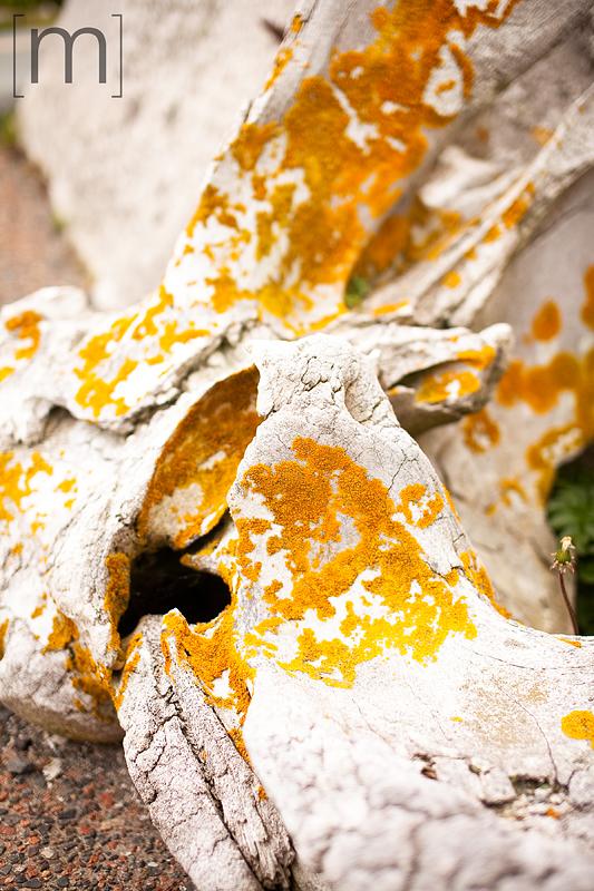 a travel photo of a rotting anchor in peggys cove nova scotia