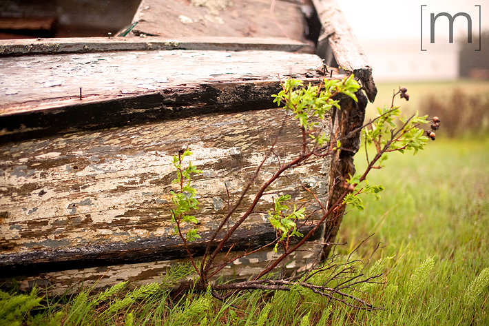 a travel photo of a rotting boat in pei