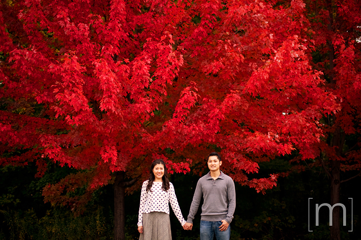 a photo of a couple standing infront of a red maple at a fall engagement shoot at unionville markham